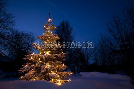 weihnachtsbaum im schnee winter