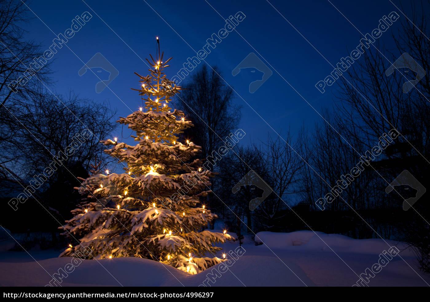 weihnachtsbaum im schnee winter lizenzfreies bild 4996297 bildagentur panthermedia. Black Bedroom Furniture Sets. Home Design Ideas