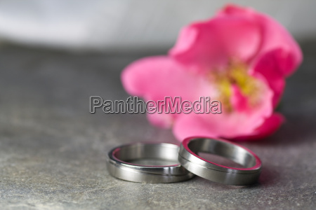 wedding rings and pink rose
