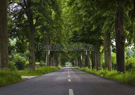 deutsche alleenstrasse