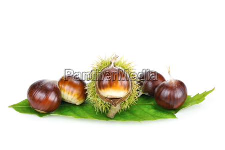 fresh chestnuts on a sheet