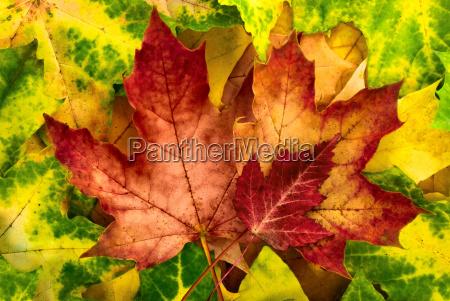 atmospheric autumn arrangement