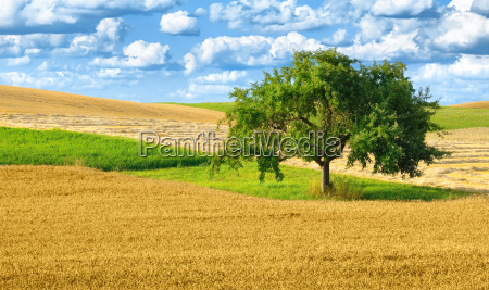 colorful slightly hilly cultural landscape