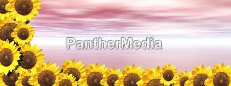 rosa ozean und sonnenblumen