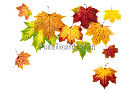 arrangement of falling autumn leaves