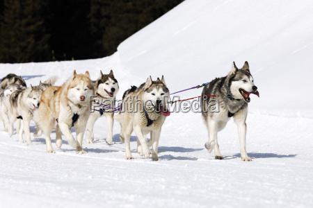 winter hunde
