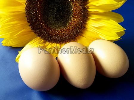 drei frische rohe bio eier mit