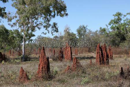 termitenhuegel 1