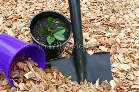 mulch und schwarze schaufel mit topfpflanze
