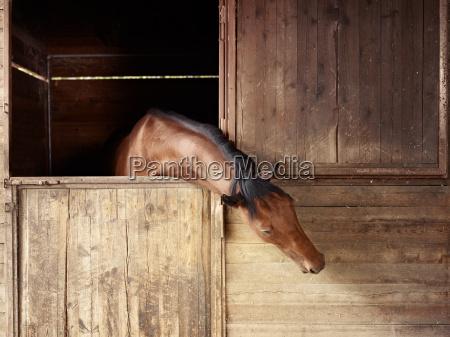 reitschule pferd aus stall