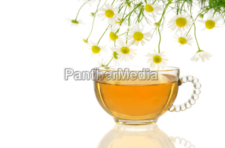 cup of chamomile tea with fresh