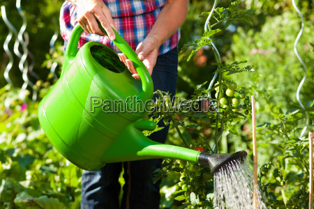 gardening in summer woman pours