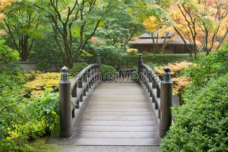 wooden foot bridge in japanese garden
