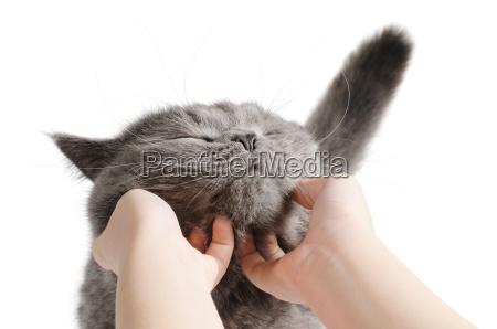 glueckliche katze ist sehr zufrieden mit