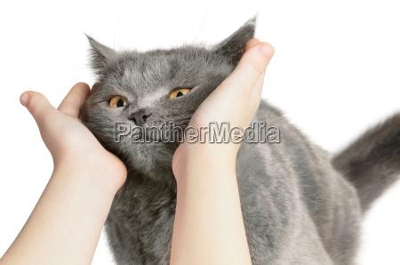 glueckliche katze ist mit der handstreicherei