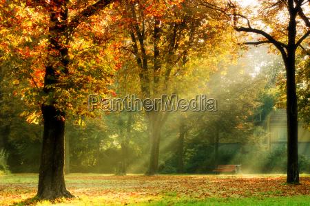 herbst park laub licht morgens sonne