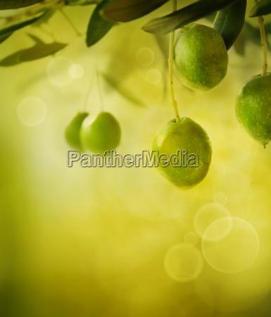 olives design background