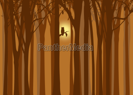 halloween illustration autumn forest with owl