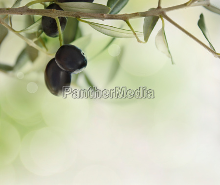 olives design background