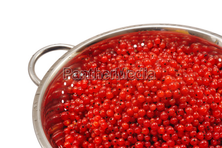 fresh red currant berries with water