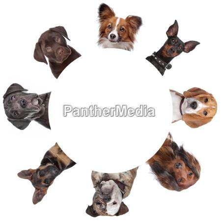 gruppe von hundeportraets um einen kreis