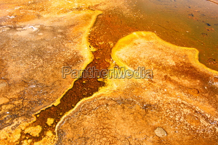 thermophile bakterien im yellowstone