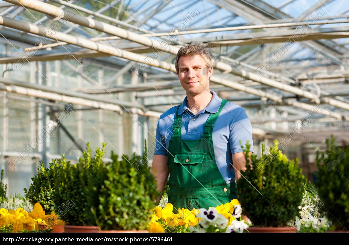 Gärtner im Gewächshaus der Gärtnerei - Lizenzfreies Bild - #5736461 ...