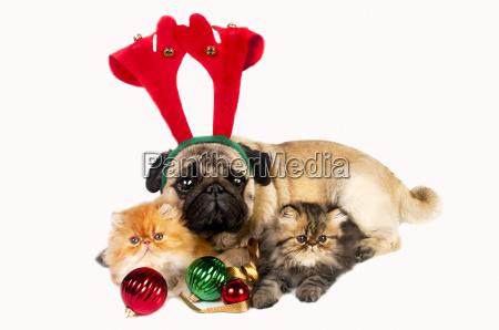 weihnachtshund und kaetzchen