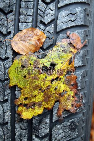 autumn leaves on a car tire
