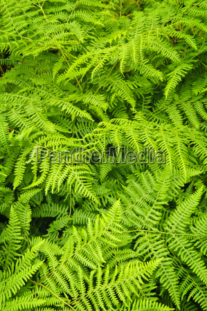 fern background