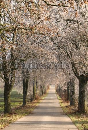 beautiful avenues