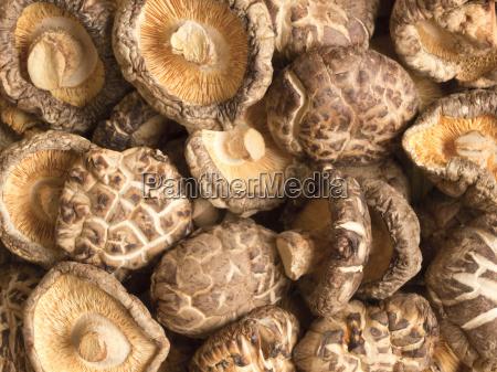 getrocknete shiitake pilze