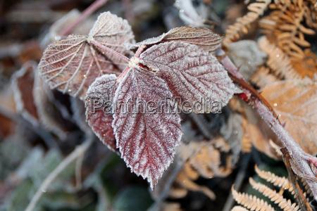 blaetter bei frost