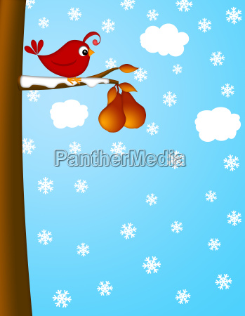 christmas partridge on a pear tree
