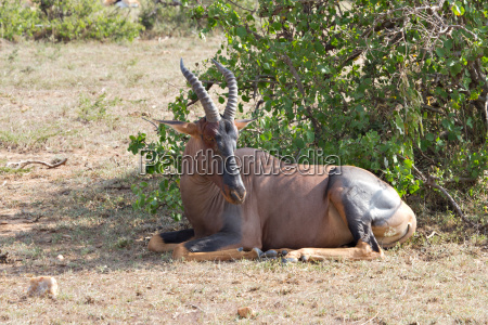 closeup wildgehege antilope wiese gras rasen