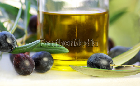 olive oil bottle and a branch