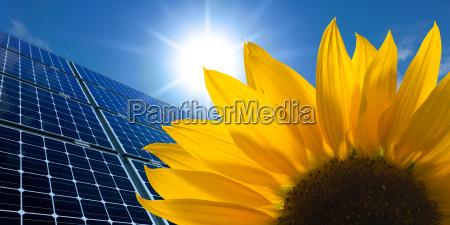 solarmodule und sonnenblume vor sonnigem himmel