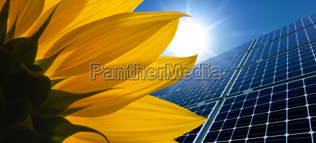 solar panels and sunflower against a