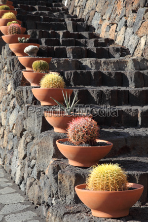 cactuses at the volcanic steps lanzarote