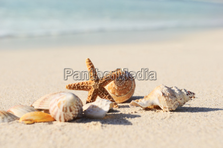 starfish auf dem strand