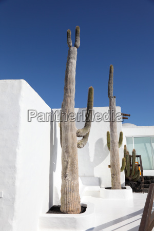 cactuses in front of a white