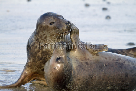 cling seals