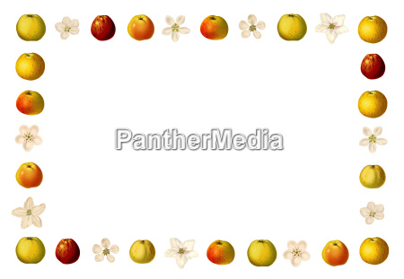frame with apples