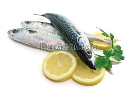 drei makrele mit zitrone und petersilie