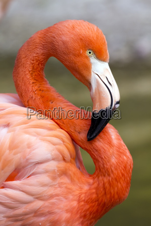 flamingo in s