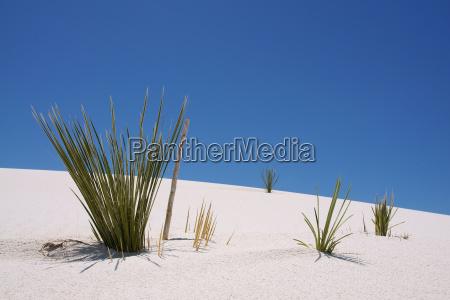 pflanzen auf einer sandduene in white