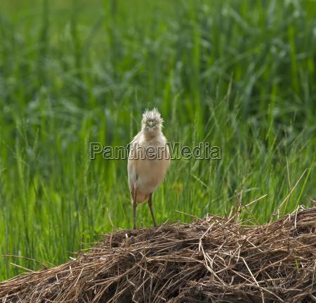 vogel afrika wildlife gambia