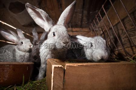 junge kaninchen essen gras in einem