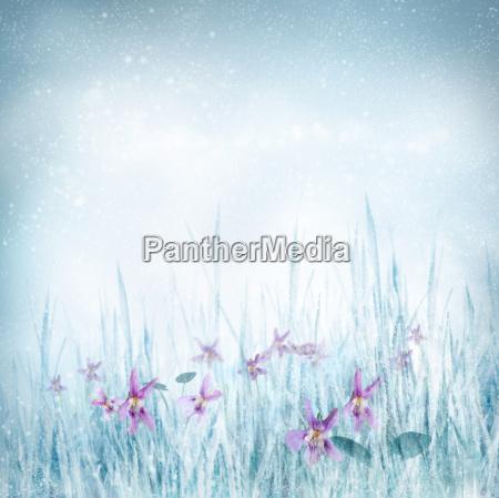 fruehlingsblumenhintergrund mit violetten blueten