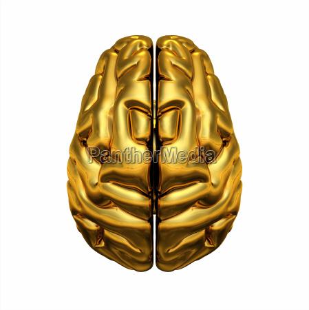 gold brain draufsicht